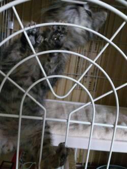 猫ちゃんってすごい!