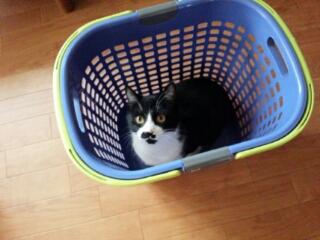 洗濯カゴが好き(*^-^*)