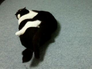 猫ちゃんってハード。(@_@)