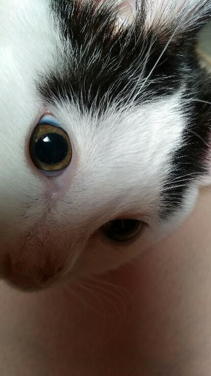 しぐれの瞳孔。